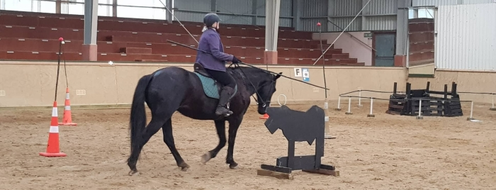 Working Equitation Bull and Spear in NZ